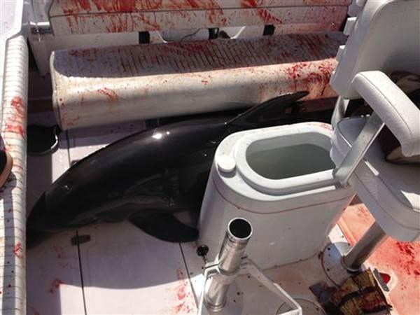 dolphin-attack