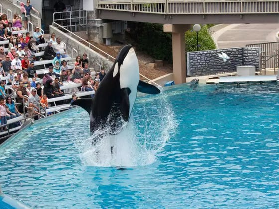 SeaWorld Is Officially Getting Rid Of Their Famous Killer Whale Show Because It Bummed Guests Out Too Much