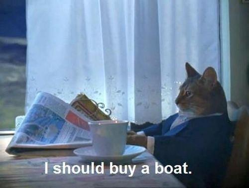 i-should-buy-a-boat-cat