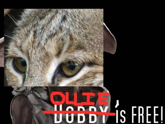 Free At Last, Free At Last! The National Zoo Has Given Up Looking For Ollie The Bobcat