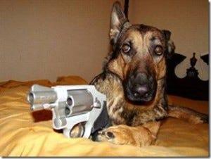 Dog-with-Gun-300x226