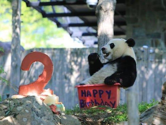 Happy 2nd Birthday To Bei Bei!