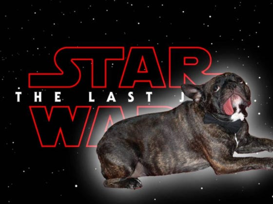 Carrie Fisher's Dog, Gary Fisher, Will Appear In Star Wars: The Last Jedi As An Alien Version Of Himself
