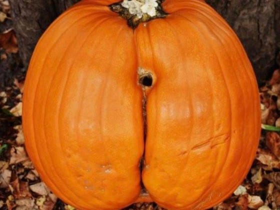 #5) Is This Pumpkin Tryin To Get The Pipe?/ The Internet Is Now Mad As Us For Asking Whether This Pumpkin Was Trying To Get The Pipe/ An Open Letter: I'm Sorry For Trying To Dick Down A Pumpkin