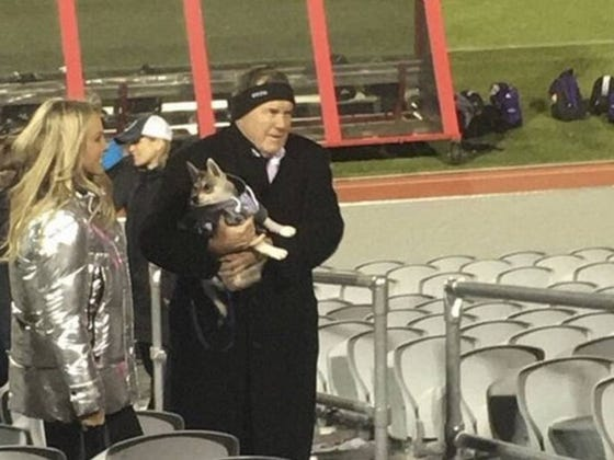 Belichick Takes His Wolf to a Lacrosse Game Like a Boss