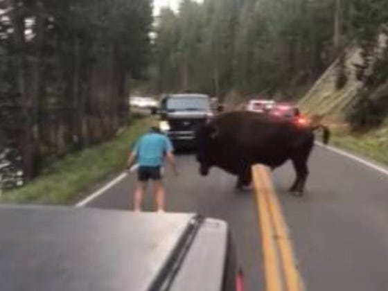 Remember The Guy I Wished Had Gotten Killed By A Bison At Yellowstone? Turns Out He's Been On A National Park Crime Spree