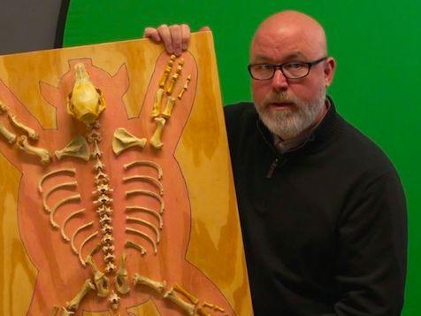 Extra Large: Scientific Skeleton in My Closet